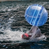 Делфини в синхрон