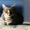 A cat in the Montserrat Mountain