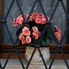 Цветя и прозорци