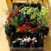 Цветя и тераси във Венеция